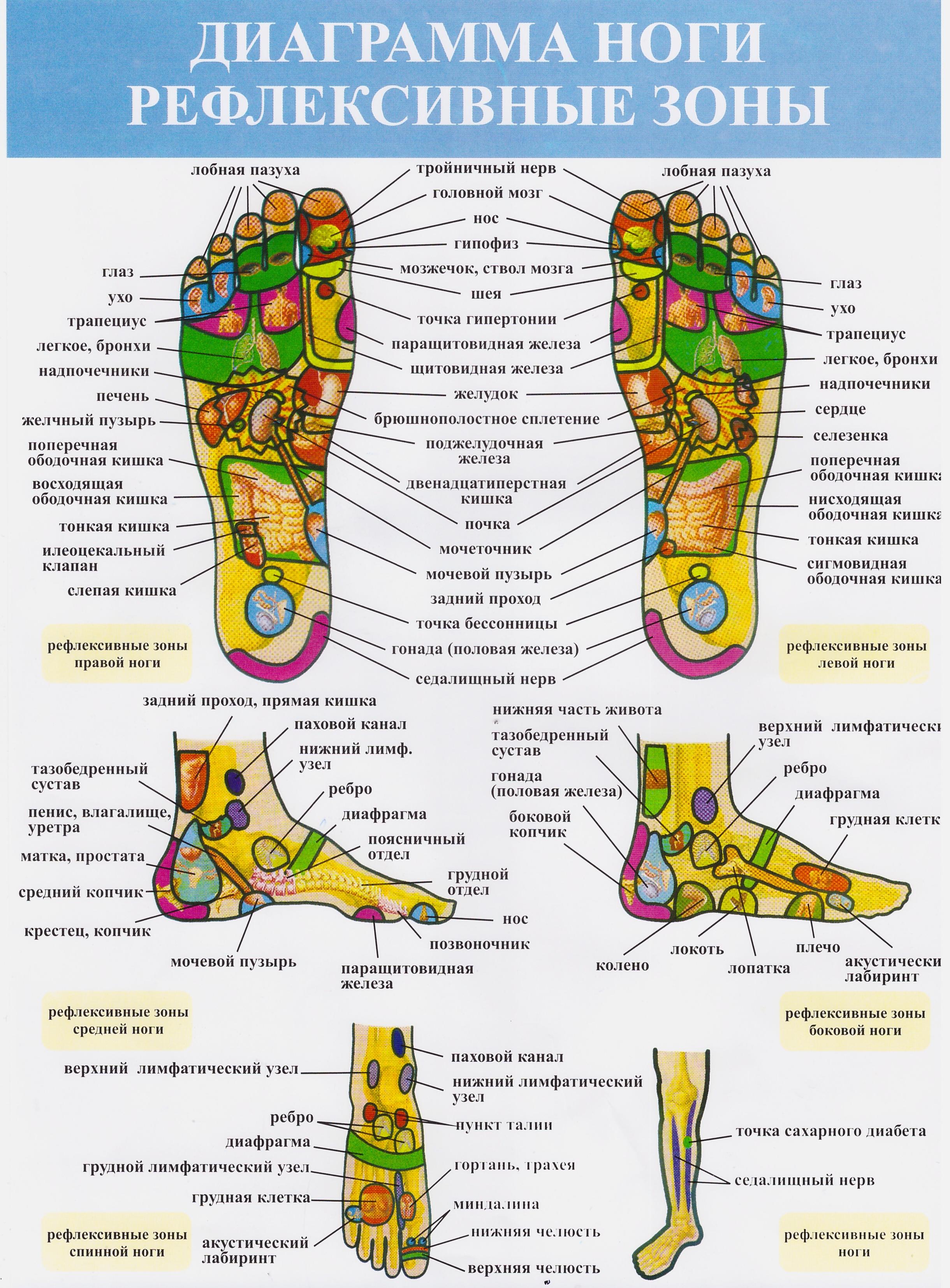 рефлекторные зоны - ноги