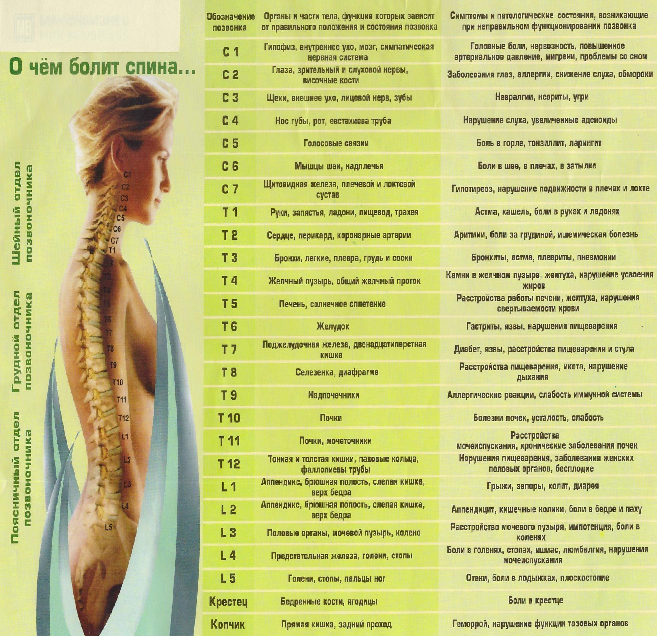 О чем болит спина